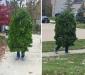 Bush Halloween Costume
